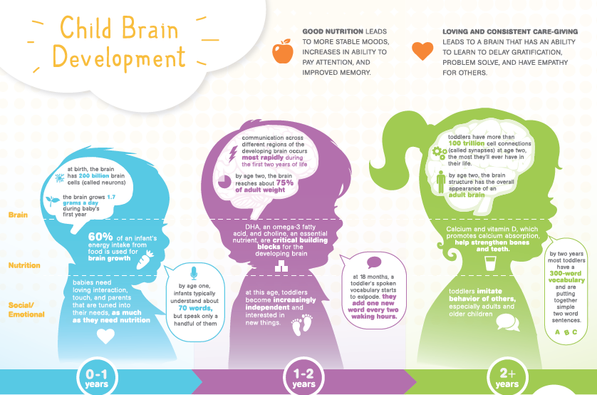 development of the childs brain 10 important activities to stimulate your child's brain development.